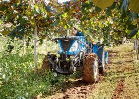 Immagine dell'articolo  New Holland agriculture T4F Bassotto